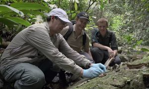 Panama: First release of endangered frogs
