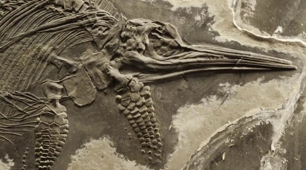 Sneak Peek: David H. Koch Hall of Fossils