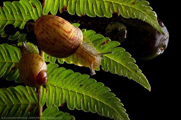snail snake