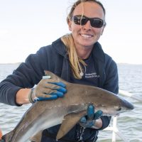 Smithsonian scientists become shark detectives to track species in the Chesapeake Bay